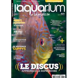 Aquarium à la maison n° 131...